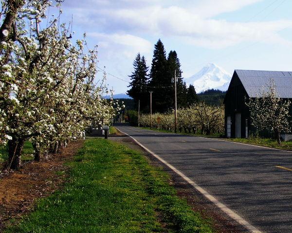 Mount Hood from Dee, Oregon