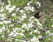Mourning Cloak - Crabtree - 5/1/08