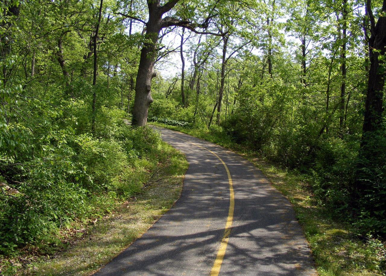 Stearn's Woods